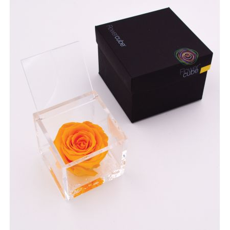 Flowercube 6 x 6cm Orange Rose - image 1