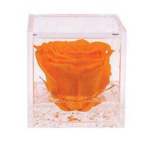 Flowercube 6 x 6cm Orange Rose - image 2