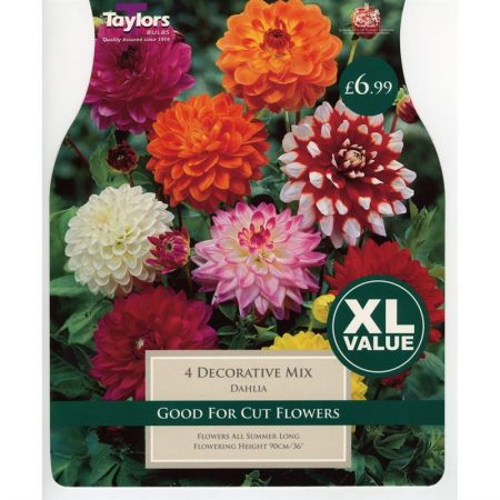 Taylors Bulbs XL Value Dahlia Decorative Mixed (4 Pack)